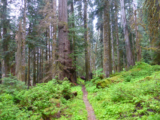 The North Fork Skokomish River Trail