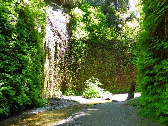 The loop passes through narrow, fern-lined walls of Home Creek